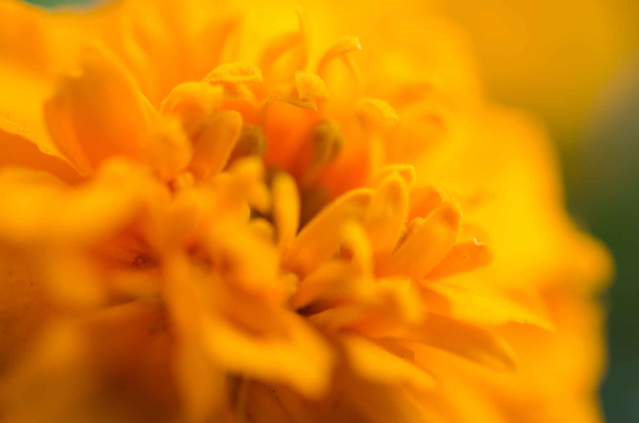 Photograph Yellow Flower by Soleil Neon on 500px