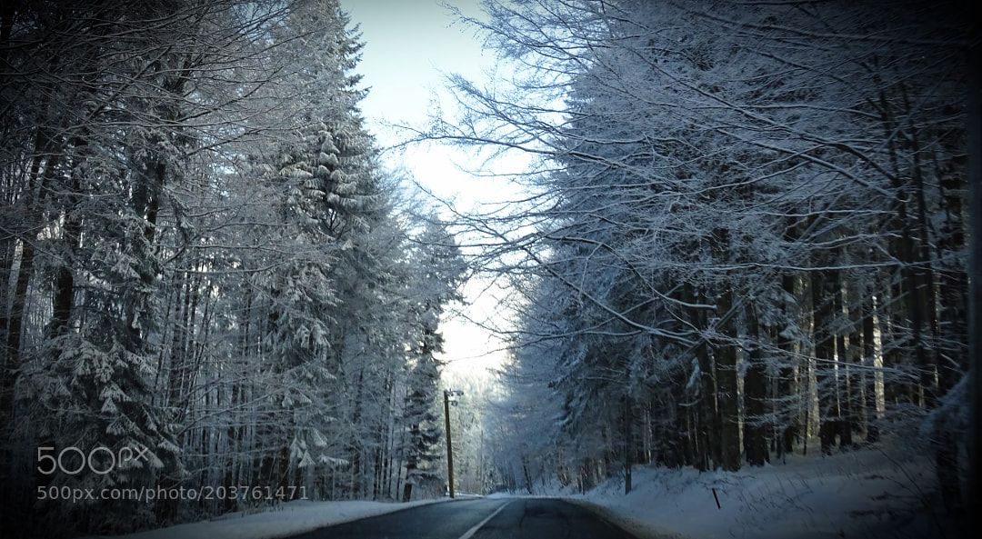 On the road in a snowy forest