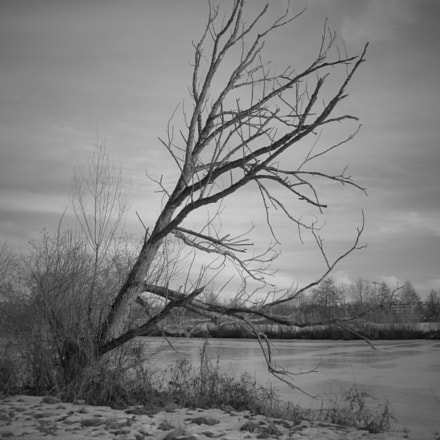 Old tree near by, Canon POWERSHOT G7