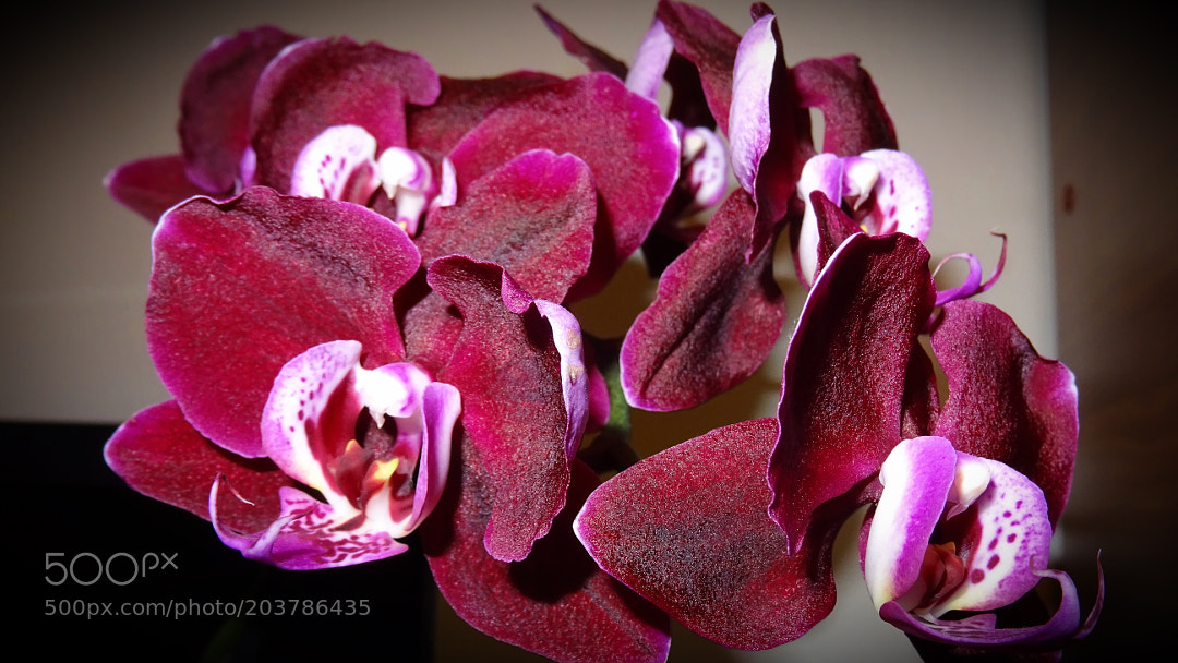 Beautiful orchid details
