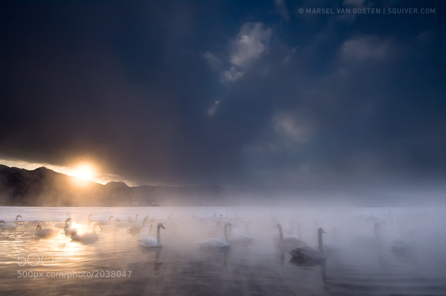 I shot these whooper swans on our Japan workshop on Hokkaido. The moment I saw this scene, I was immediately taken by the fairy-tale like mood. When I set up my tripod there was hardly any light because of the thick cloud cover, but I decided to wait and hope for the sun to appear from below the clouds, just before it would hide behind the mountains in the background. I was very lucky that it did.