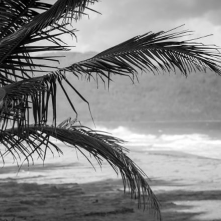 Palm Beach, Canon EOS 80D, Canon EF 300mm f/2.8L IS II USM