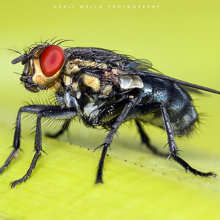 Untitled, Canon EOS 7D, Canon EF 100mm f/2.8 Macro