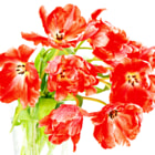 fire-red tulips. spring flowers bouquet
