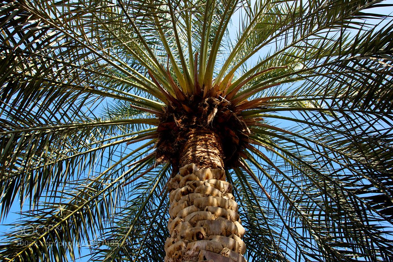 Photograph Jumeirah Palm by Guido Merkelbach on 500px