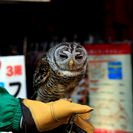 Salesowl, Canon EOS 6D, Canon EF 28-105mm f/3.5-4.5 USM
