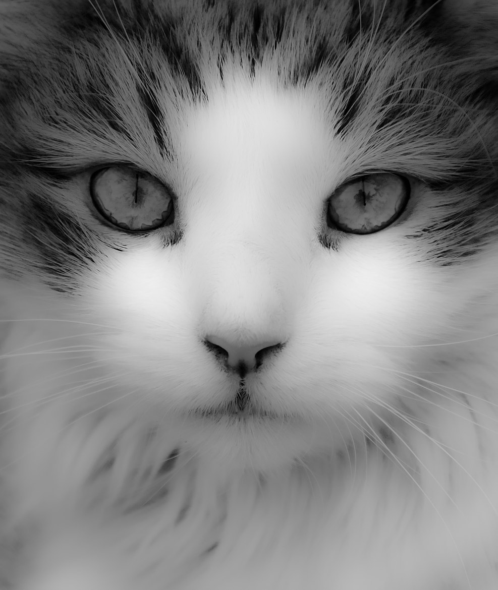 Photograph Eyes Have It by Mark Schadly on 500px