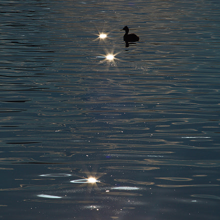 Stars in the lake, Canon EOS 5D MARK III, Canon EF 200mm f/2.8L