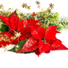 Red Poinsettia. Christmas Flower with golden decoration