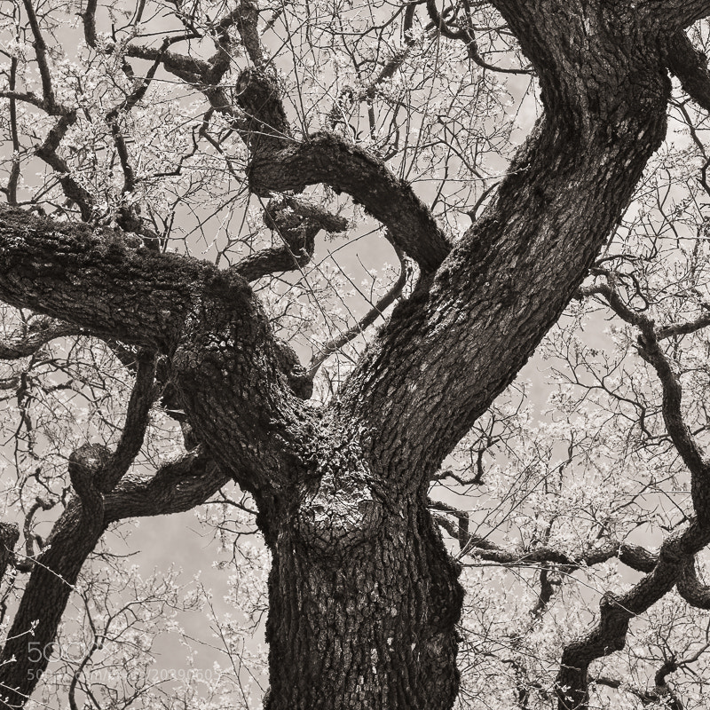 Photograph Gnarled Limbs by Dave Keating on 500px