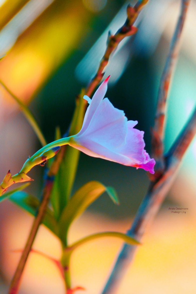 Photograph Nature's Beauty by Anaïs Oetelmans on 500px