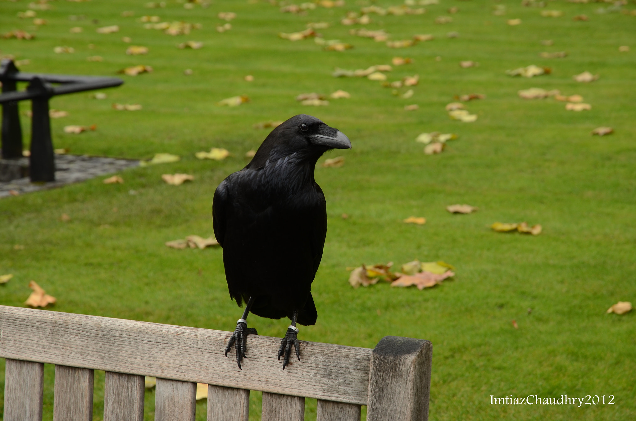 Photograph Raven by Imtiaz Chaudhry on 500px