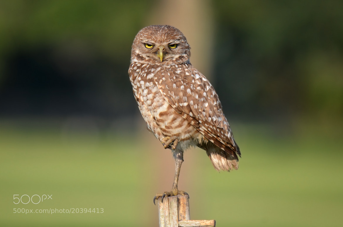 """Photograph """"We Are Not Amused"""" by Peter Brannon on 500px"""