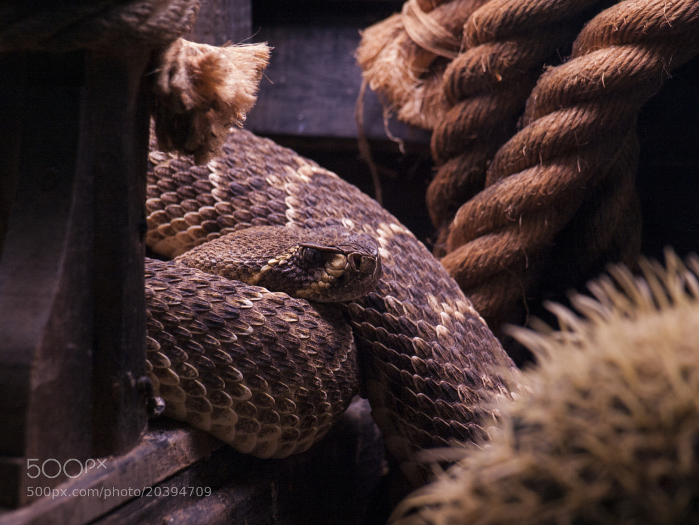 Photograph Hunter by Juan David Dueñas on 500px