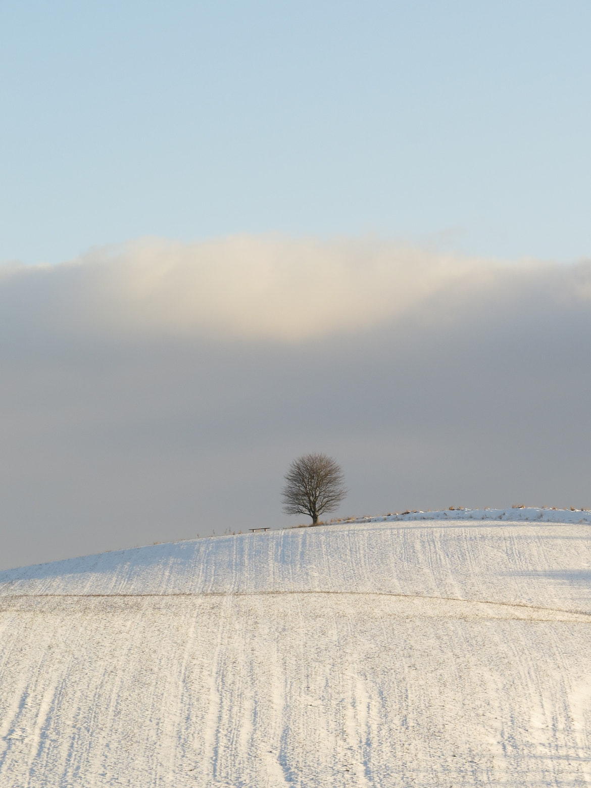 Photograph one tree in the cold by Annette Daugaard on 500px