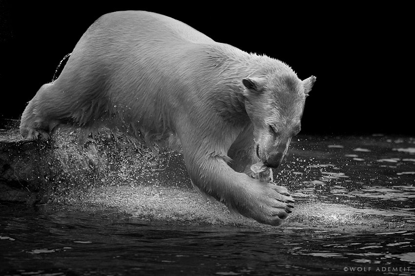 Photograph PLUNGE by Wolf Ademeit on 500px