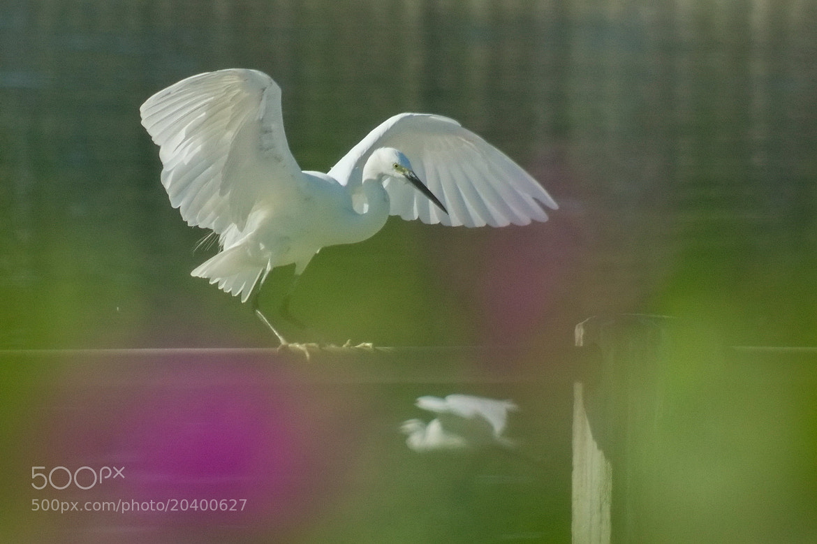 Photograph Dancing by sgmillionxu2000 on 500px