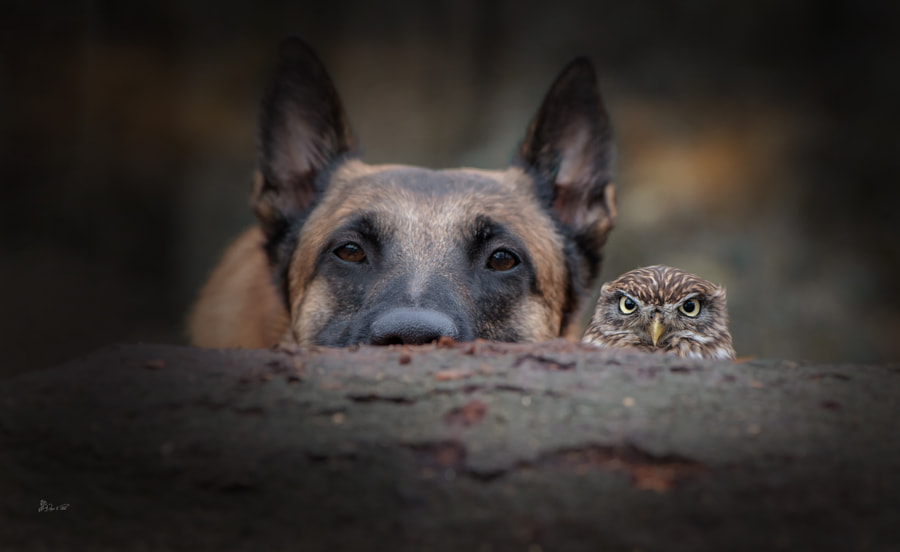 Abstand by Tanja Brandt on 500px.com