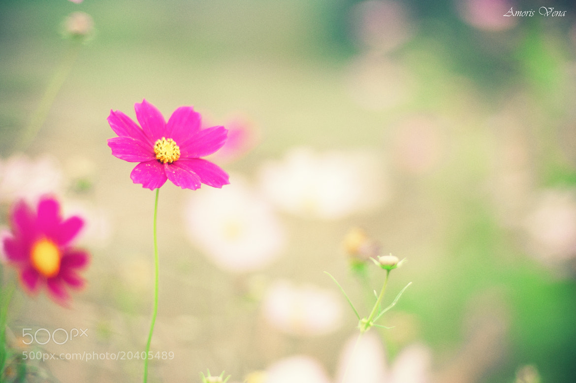 Photograph Cosmos  by Amoris Vena on 500px