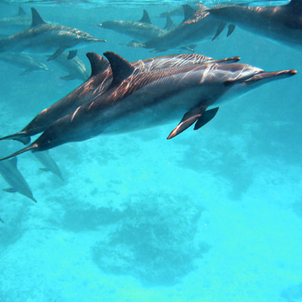 Spinner Dolphins, Canon POWERSHOT S30