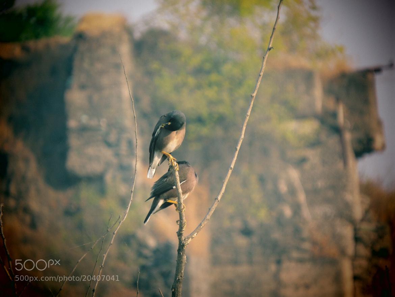 Photograph Untitled by Ashish Darekar on 500px