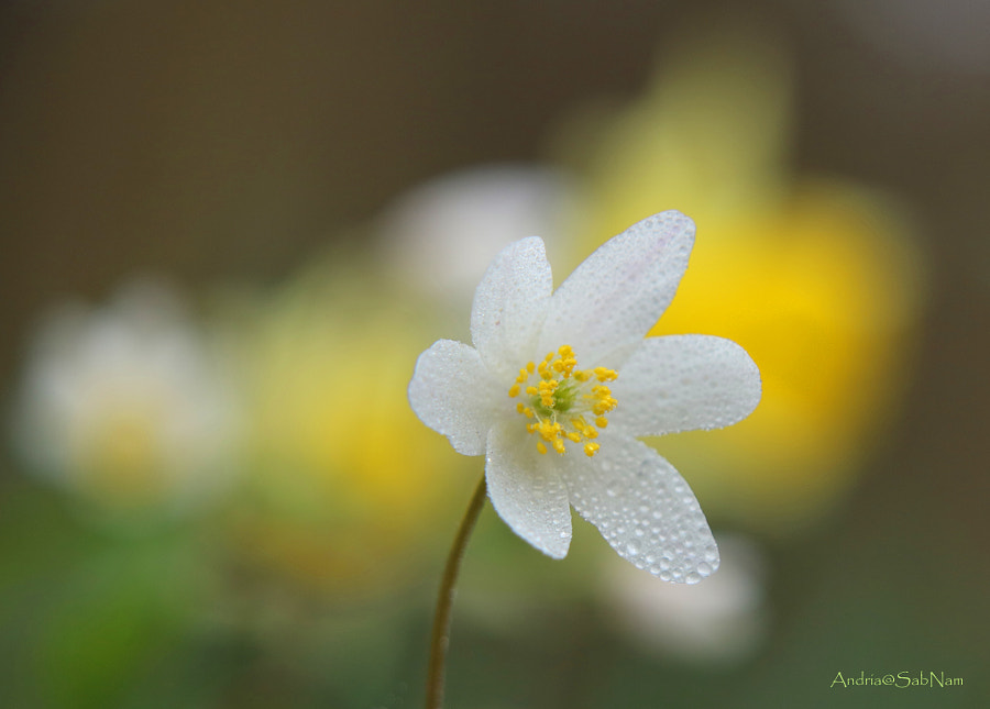 Spring Is Here by Andriamanantsoa Mamy on 500px.com