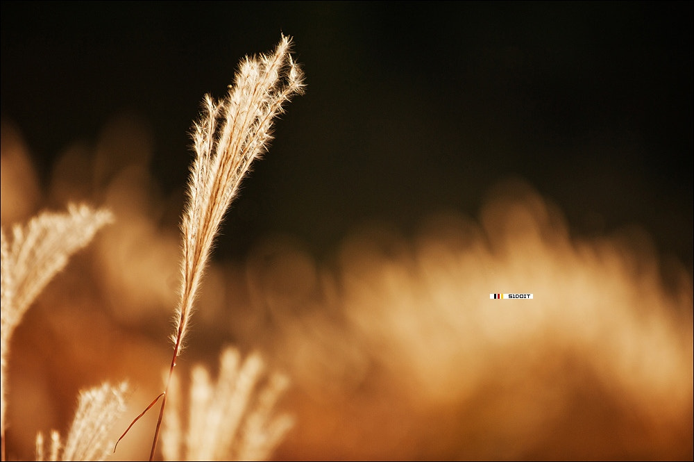 Photograph sunlight 1 by Liu songtao on 500px