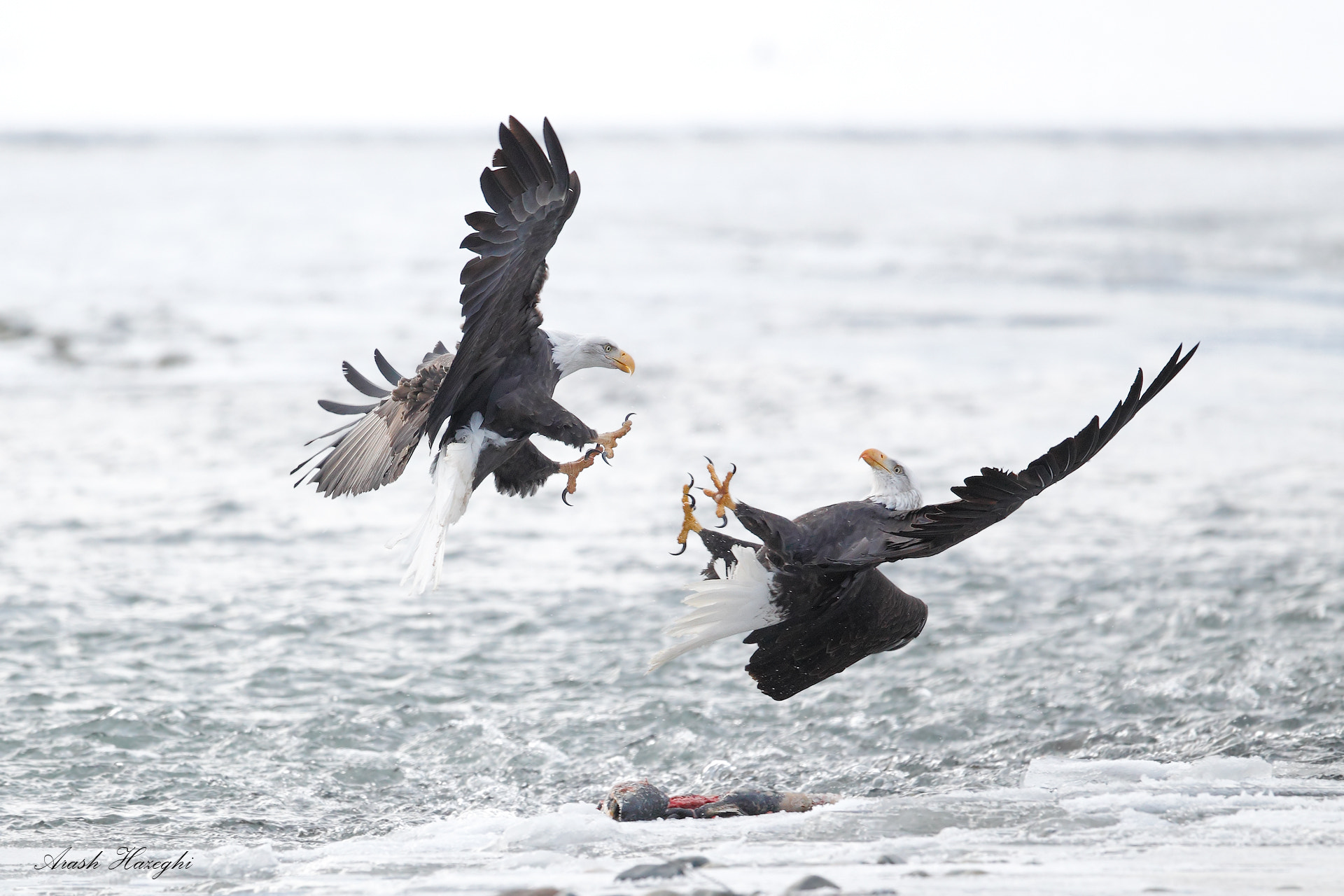 Photograph Fight over fish by Ari Hazeghi on 500px