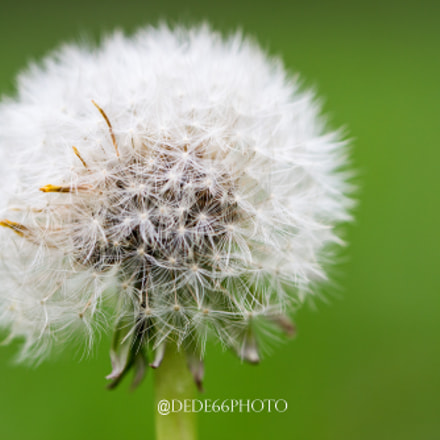 Dandelion in green sauce, Canon EOS 600D, Sigma 105mm f/2.8 EX DG OS HSM Macro