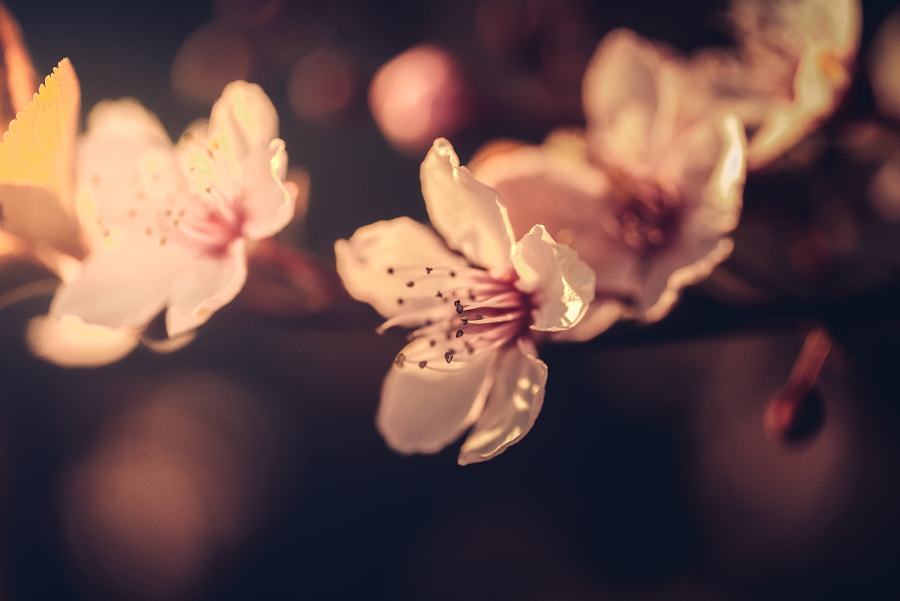 Spring by HatCat Photography on 500px.com