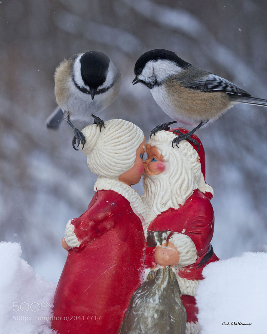 Photograph Have you a kiss on your list ? by Andre Villeneuve on 500px