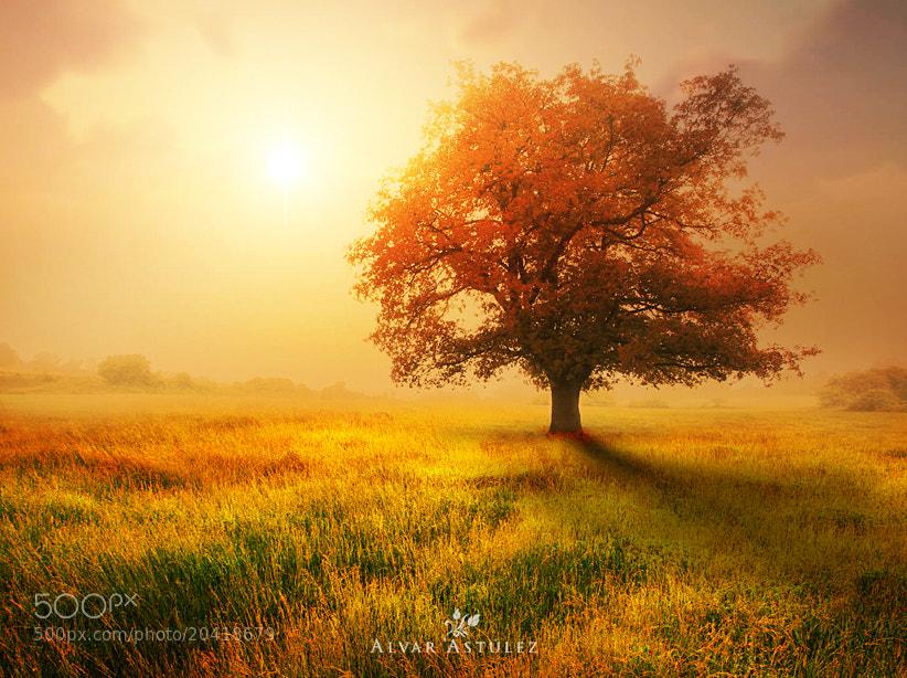 Photograph Red Oak** by Alvar Astúlez on 500px