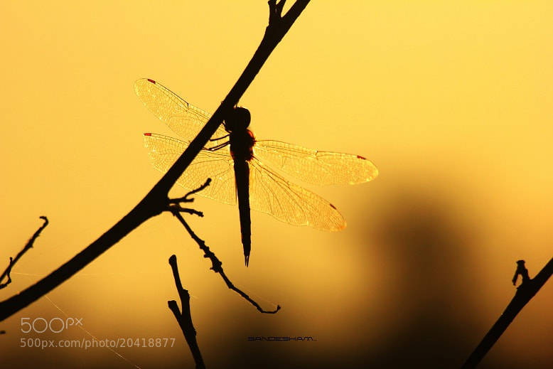 Photograph GOLDEN!!! by Sandesh nk on 500px