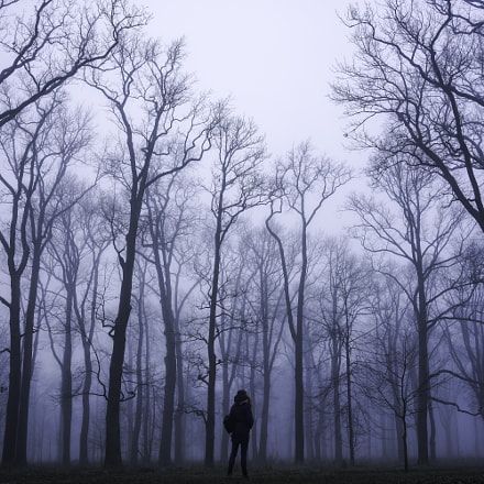 Forest in fog, Sony ILCE-7, Sony FE 35mm F2.8 ZA
