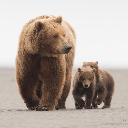 Bear family, Canon EOS-1D X, Canon EF 600mm f/4.0L IS II USM + 1.4x