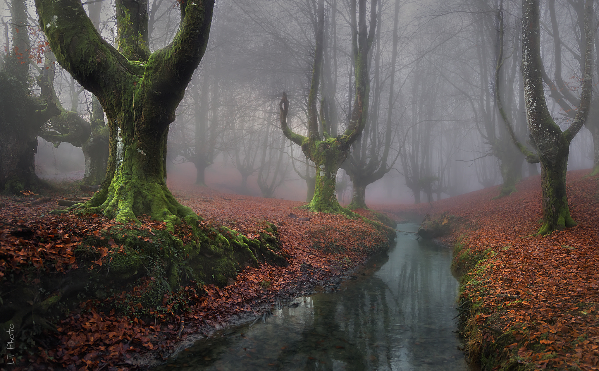 Photograph Misty Morning II by Javier de la Torre on 500px