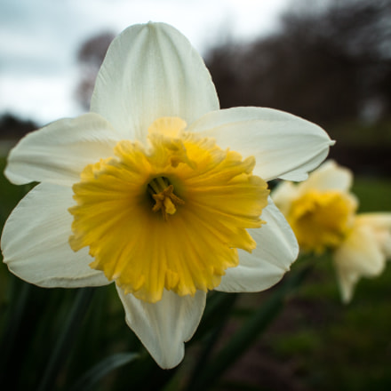 Hello spring, you are, Canon EOS M, Canon EF-M 22mm f/2 STM