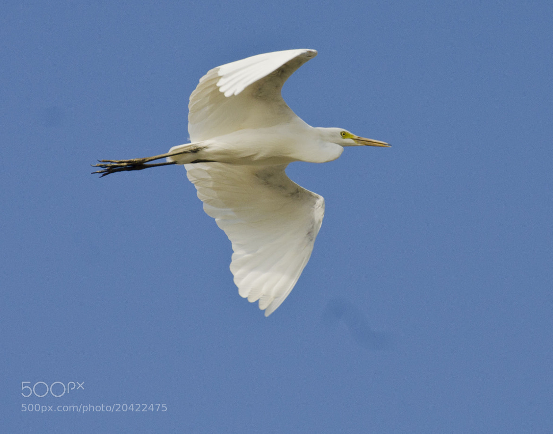 Photograph bird 7 by thiet_vannguyen on 500px