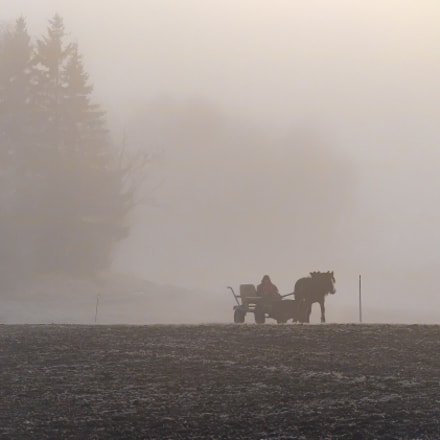 Through the fog, Canon EOS M3, Canon EF-M 55-200mm f/4.5-6.3 IS STM