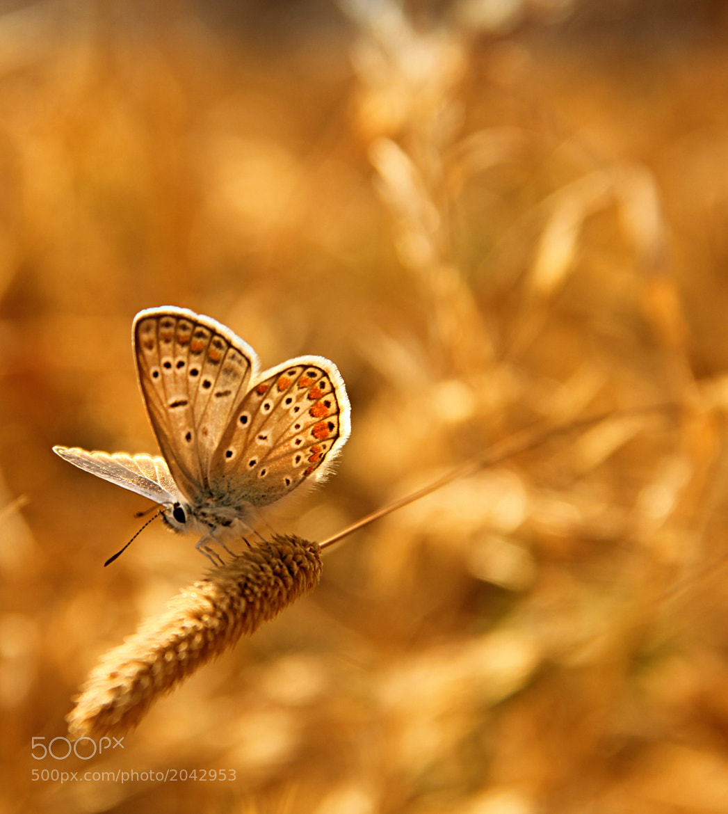 Photograph butterfly by Elin Aras on 500px