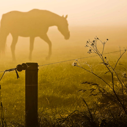 foggy horse, Canon EOS 5D, Canon EF100-400mm f/4.5-5.6L IS USM
