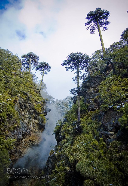 Photograph Tolhuaca by Ricardo Martinez on 500px