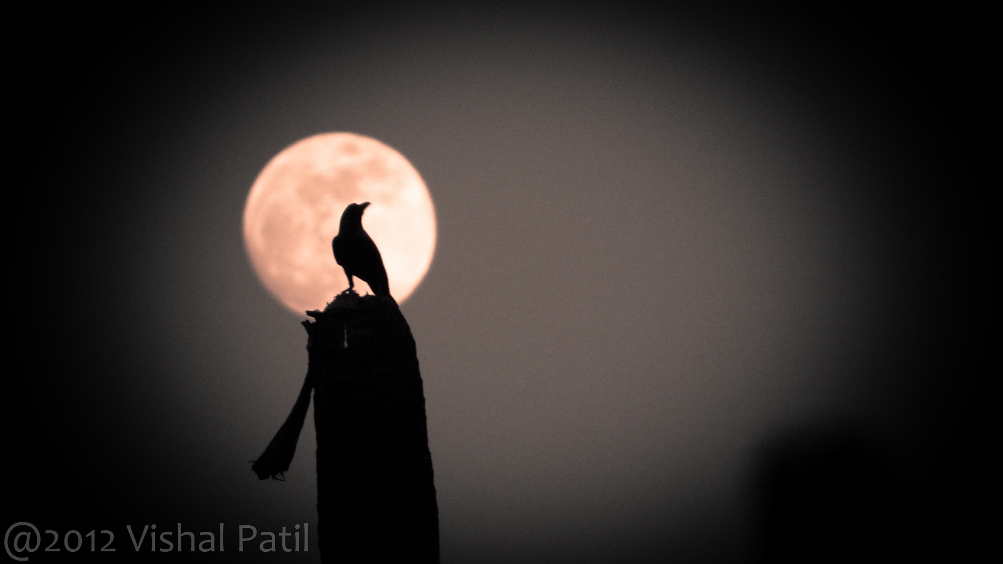 Photograph Moonlight by Vishal Patil on 500px