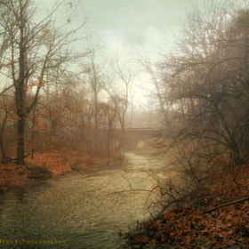 Winter Mist by Jessica Jenney (jjenney)) on 500px.com