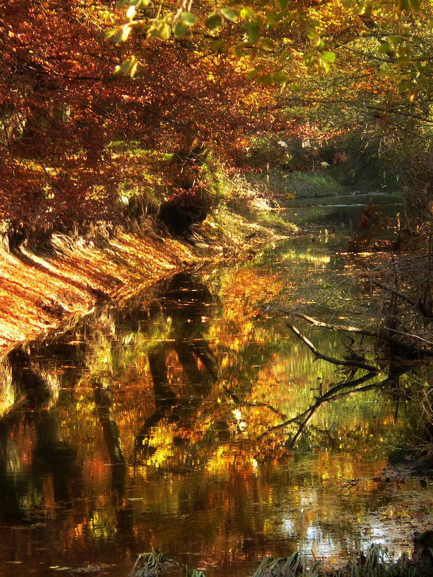 Photograph fall imperfection by kiminur lurra on 500px