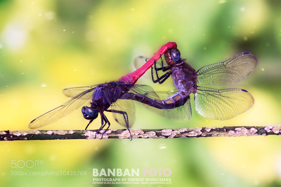 Photograph Untitled by Siriwat Wongchana on 500px