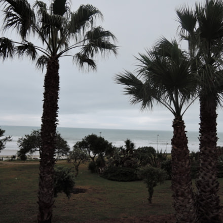 palms lawn and ocean, Nikon COOLPIX P340