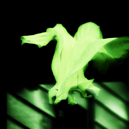 Green Ghost, Canon EOS DIGITAL REBEL XS, Canon EF-S 55-250mm f/4-5.6 IS