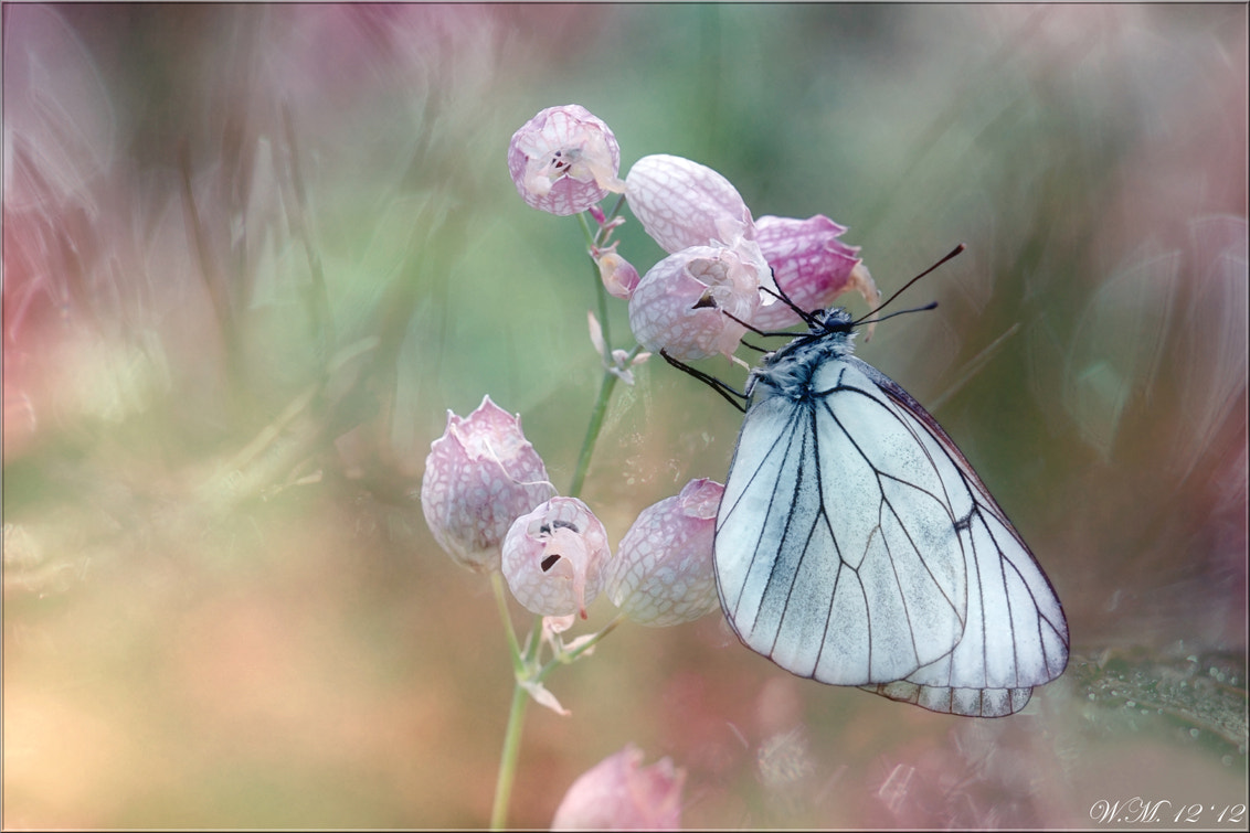 Photograph Perfect dream... by Wil Mijer on 500px