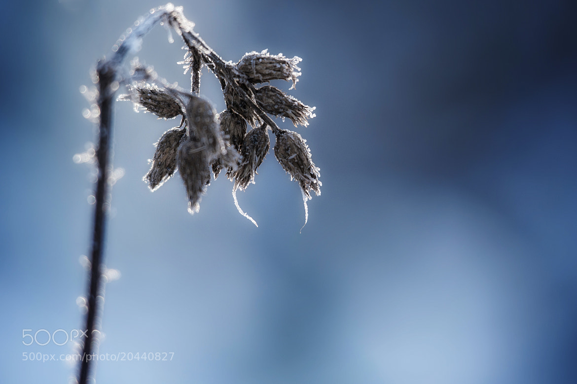 Photograph frozen. by Linus Englund on 500px